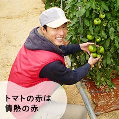 トマトの赤は情熱の赤