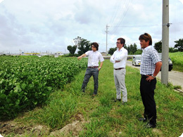 枝豆の畑を確認する鈴木3兄弟