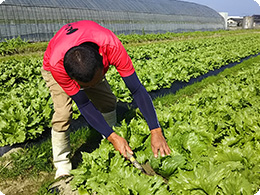 林田さんの収穫の様子