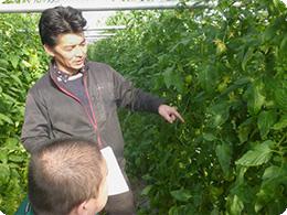 トマトの生育状況を説明する亀田社長