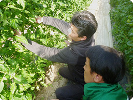 「摘果」作業を説明する亀田社長