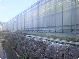 琉球石灰岩壁の上に立つハウス