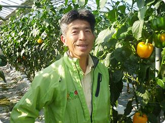 大分県臼杵市 はしもと農園(パプリカ) 代表生産者 橋本 文博さん
