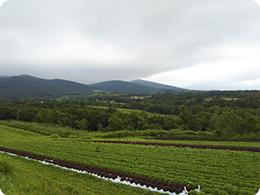 八甲田山を望む山田さんの畑
