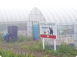標高800mの阿蘇農場