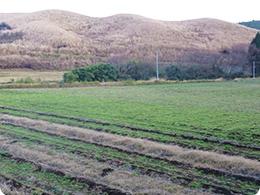 阿蘇農場建設前
