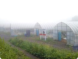朝もやの中、阿蘇農場到着