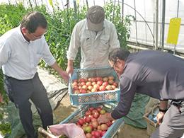 収穫したトマトを確認する安藤社長と奈須さん