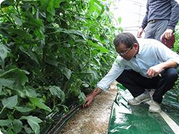 土壌確認をする安藤社長