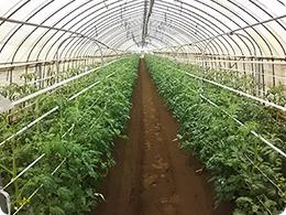 富里農場トマトハウス