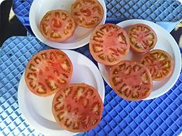 「みそら」トマト