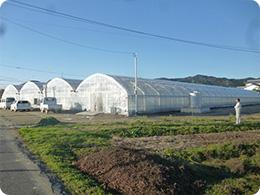 選果場施設内にある研修用のトマトハウス