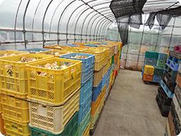 玉ねぎを乾燥、貯蔵するハウス