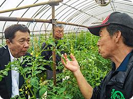 西海さんよりトマト栽培の説明をうける