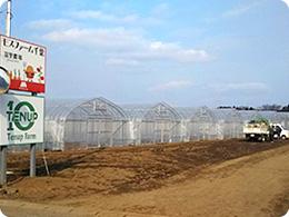 晴れた日のモスファーム千葉富里農場