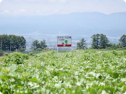 レタスを栽培していた頃の畑