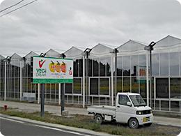 株式会社ベジ・ドリーム栗原さんの様子