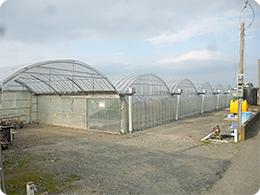 トマトを栽培するハウス