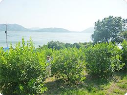 瀬戸内の海を背景にした原田さんとレモンの樹