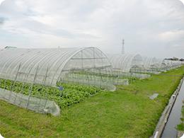 レタスを栽培するハウスその2