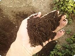 芝を寝かせてつくった自家製の床土