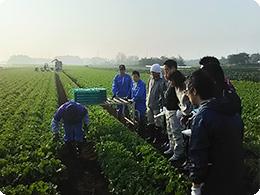 収穫の指導をする八千代組合代表の増山さん
