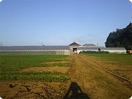 若狭農場の全景