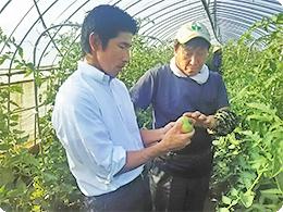 モスのスタッフとトマトの出来栄えを確認