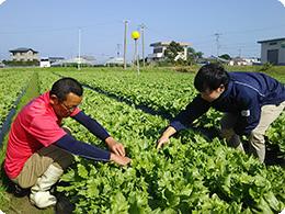 生育状況を確認する林田さんと松本さん