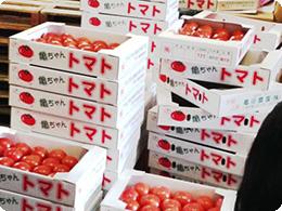 亀ちゃんトマト
