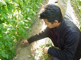 土の状態を確認する亀田社長