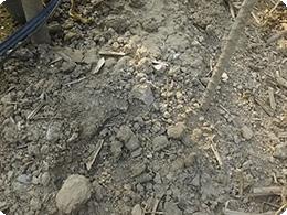 クチャ土壌
