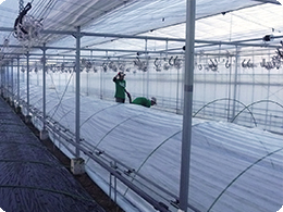 低温時の温度確保トンネル栽培