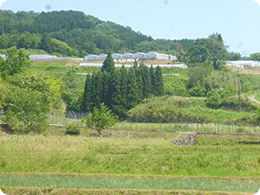丘の上にあるパプリカ圃場